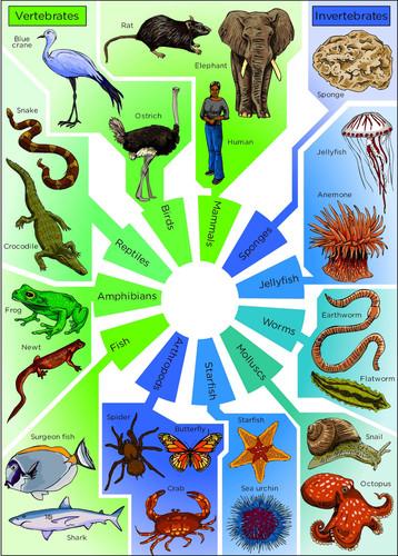 Natural Sciences Grade 7