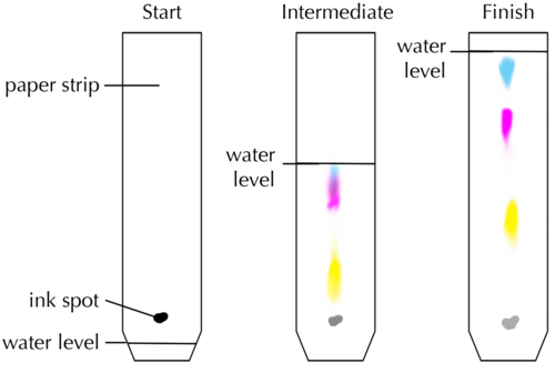 thin layer chromatography post lab report Essay about thin layer chromatography lab report 7cm from the shorter left edge and 1 paper chromatography lab report post navigation.