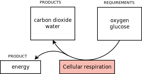 Natural sciences grade 8 requirements and products of respiration ccuart Images
