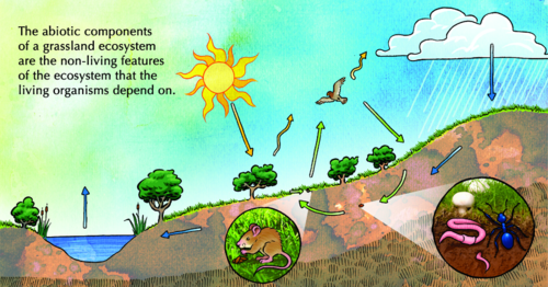 what is the relationship between abiotic and biotic environments
