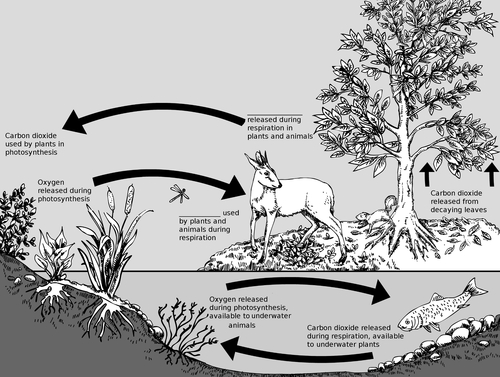 mutual relationship between animals and plants