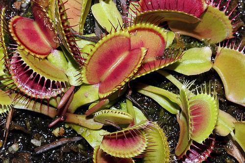 decomposer plants