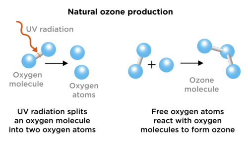 Natural sciences grade 9 oxygen forms ozone and ozone breaks apart again to form oxygen the following diagram shows the reactions that take place ccuart Image collections